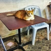 Papaya cat