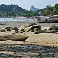 Low tide (reflux)