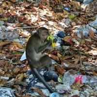 Garbage @ Monkey Beach, Koh Phi Phi