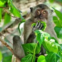 Monkey @ Monkey beach, Koh Phi Phi
