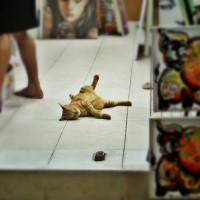 Alta pisica lenesa