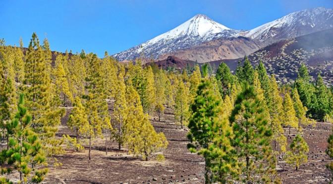 Corona forestal del Teide