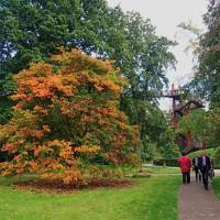 Toamna la Kew Gardens