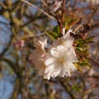 Primavara la Kew Gardens