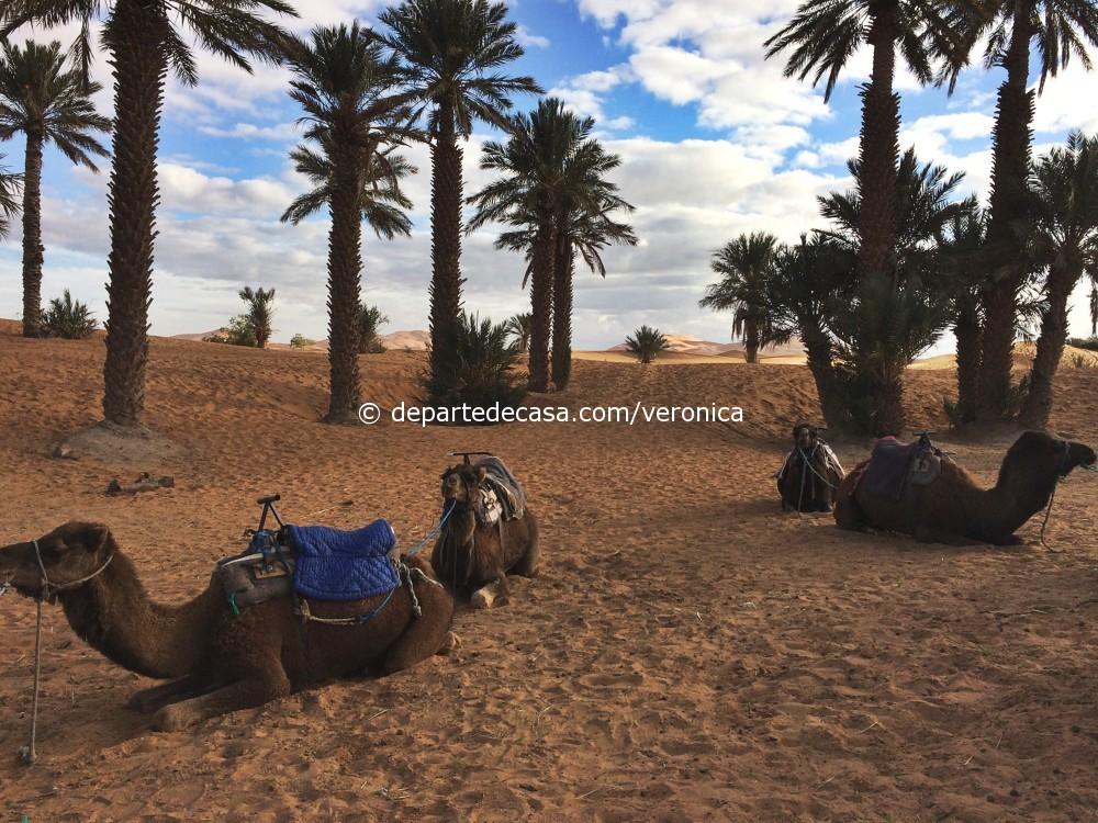 camile Maroc