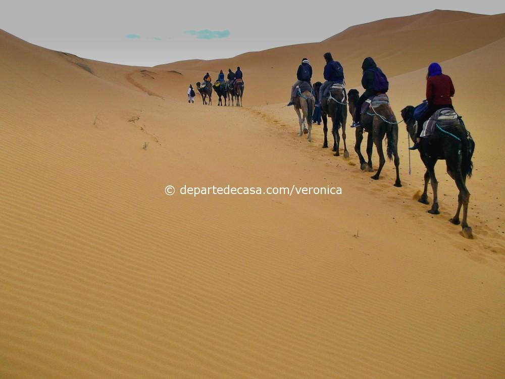 Maroc camile