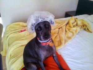 Cazare dog friendly in Romania