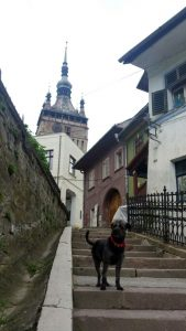 Citadela Sighisoara, cazare dog friendly