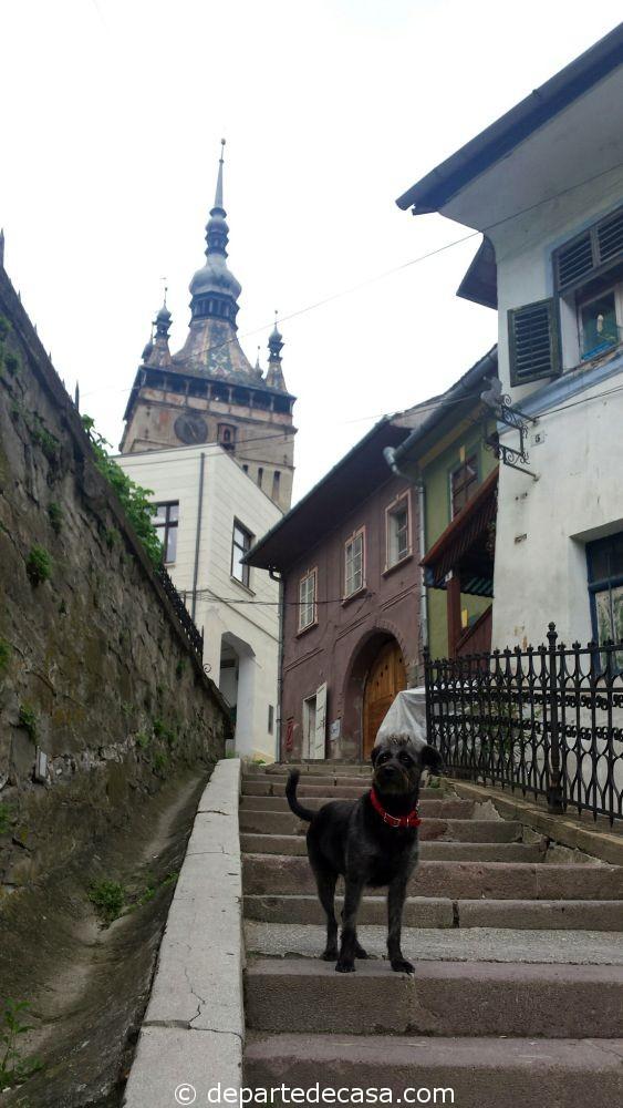 Citadela Sighisoara, cazare dog friendly