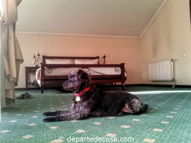 La Residenza, cazare dog friendly in Romania