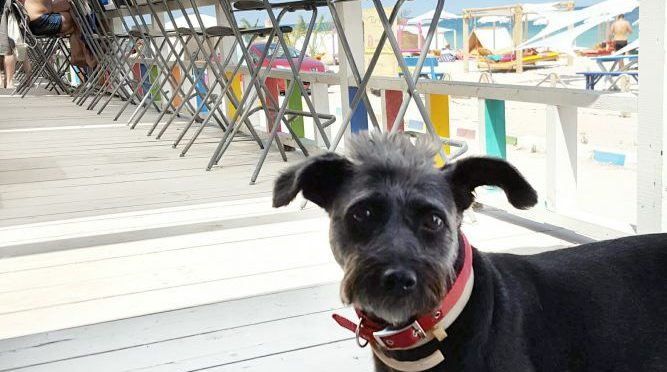 Pura Vida Vama Veche, cazare dog friendly