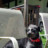 Casa Tolstoi, cazare dog friendly in Romania