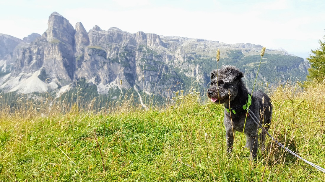 pensiuni pet friendly in romania